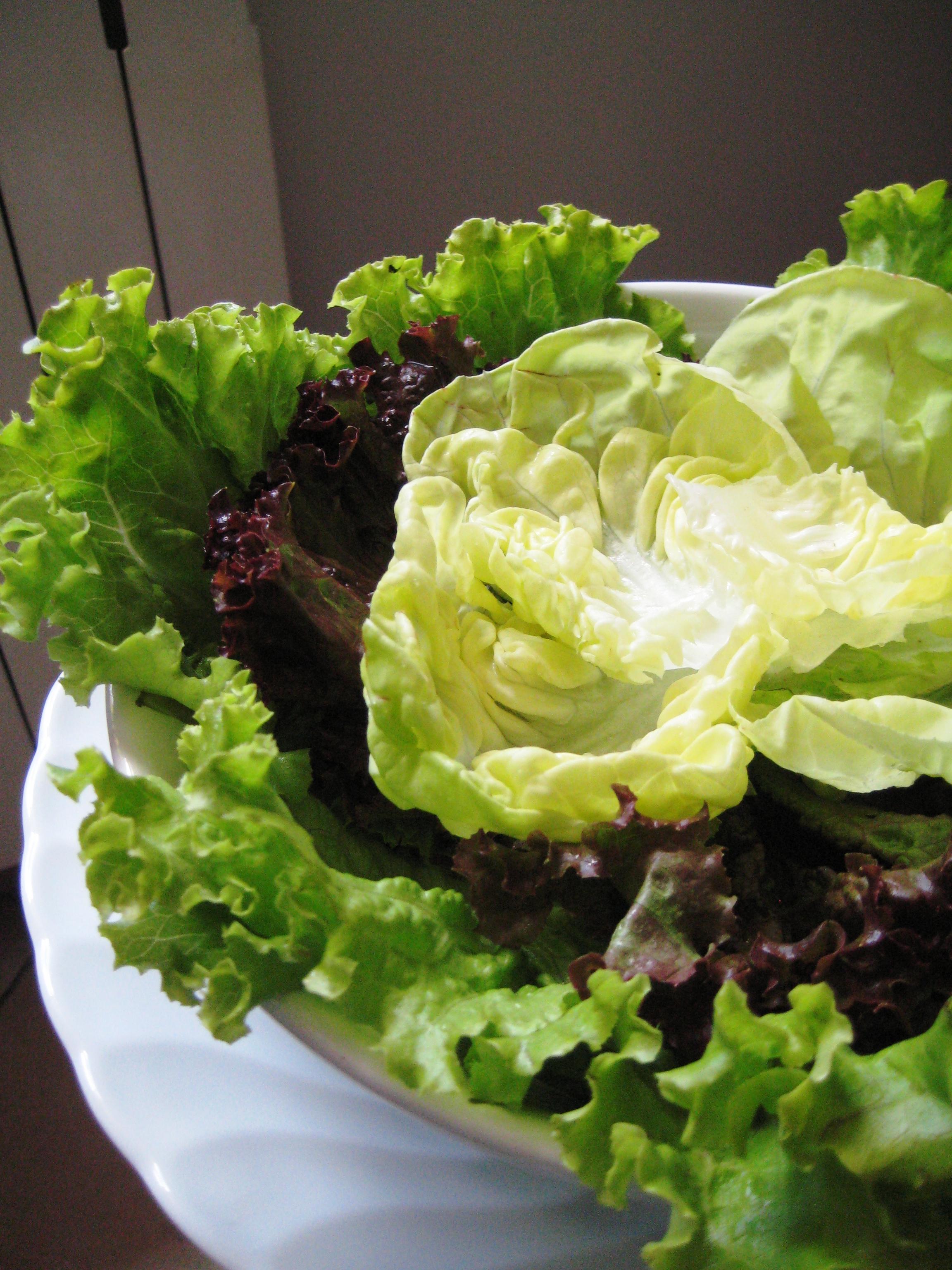 L insalata di cracco ricette pensieri e idiozie for Soncino insalata